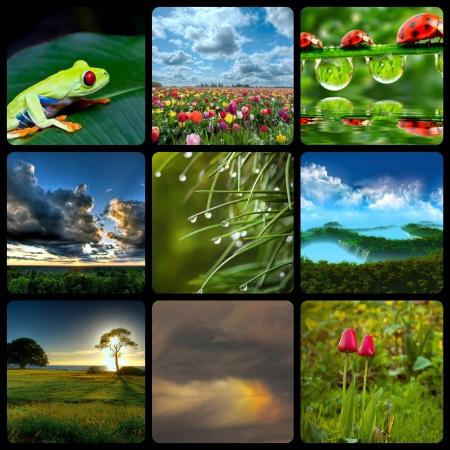 natuur1_Fotor_Collage